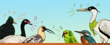 canto de aves.jpg