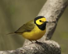 birdacademy.jpg